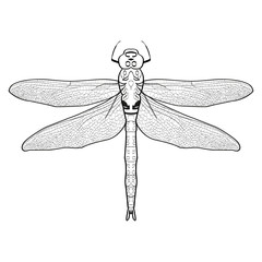 black and white  illustration of a dragonfly. Dragonfly isolated