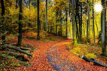 Fototapeta jesień w lesie bukowym