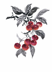 Watercolor garden rowan plant vector illustration