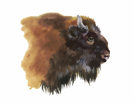 Watercolor european bison animal isolated on white background