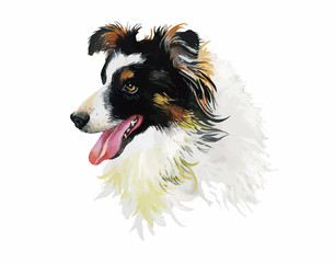 Border Collie Animal dog watercolor illustration isolated on
