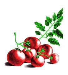 Tomatoes. Botanica