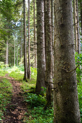 Keuken foto achterwand Bos in mist forest landscape