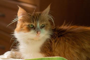 Red cat.