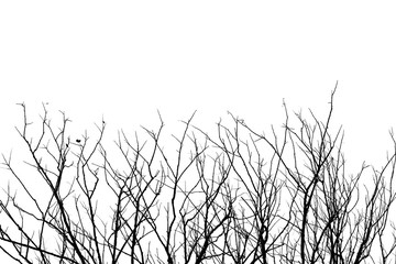 Leafless tree branch, black and white tone background.