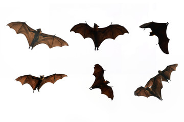 Collection Bat isolate on white background - Halloween festival
