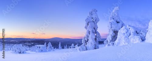 Fototapete Sunset over frozen trees on a mountain, Levi, Finnish Lapland