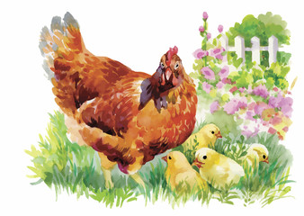 Watercolor Hen and chicks in yard vector illustration