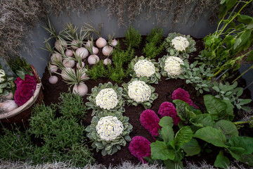 Vegetable patch decoration made of flowers