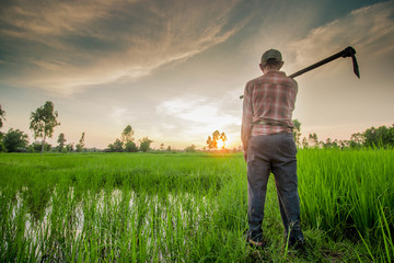 Thai farmer carrying hoe