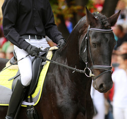 Male horse rider riding on a black friesian dressage horse