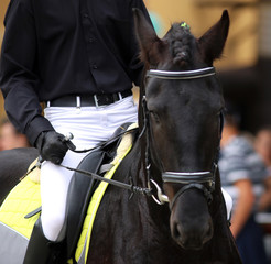 Friesian dressage horse with rider during training