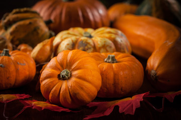 Pumpkins for Thanksgiving