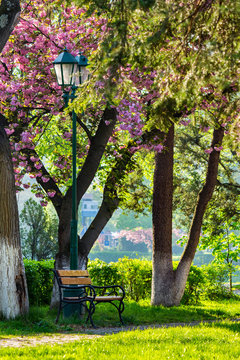 pink blossomed sakura tree near the bench and lantern
