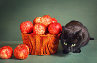 black cat and red apples on blue background