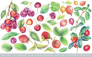 Set of different red, yellow berries and green leaves for design