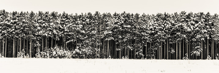 Tree lined forest edge winter snow