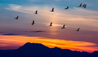 Poster de jardin Oiseau Migratory Birds Flying at Sunset