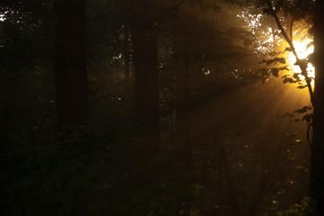 Morning light streaming through woods