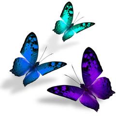 The beautiful triple flying Vagrant butterflies in fancy color o