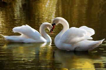 Twee zwanen bogen hun nek in de vorm van een hart