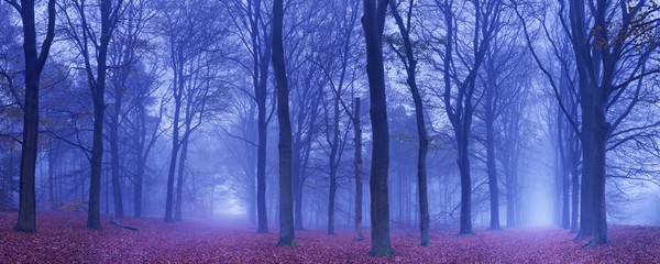 Fototapete - Two paths in a dark and foggy forest, The Netherlands