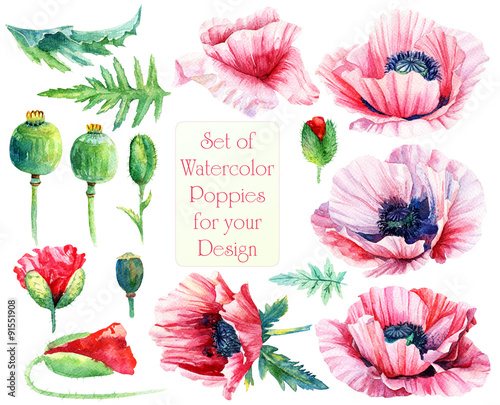 Set of different pink red poppies buds leaves for design set of different pink red poppies buds leaves for design watercolor flowers mightylinksfo