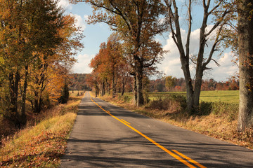 Fall Colors Along A Rural Road