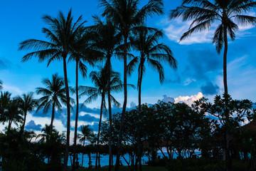 Palmen vor blauem Himmel in Koh Samui