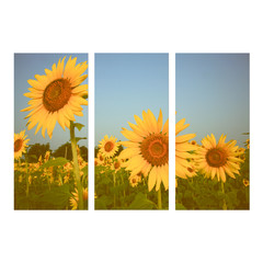 photo collage frame on isolated background