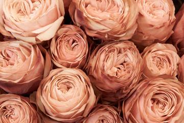Tan roses