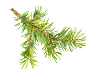 Watercolor painted fir tree branch