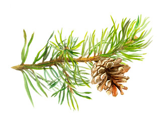 Pine tree branch with cone. Watercolor