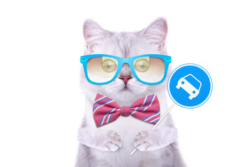 Smart handsome cat with icon car. Funny animals. Trendy cat dressed in beautiful clothes