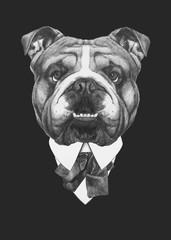 Portrait of English Bulldog in suit. Hand drawn illustration.
