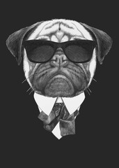 Portrait of Pug Dog in suit. Hand drawn illustration.