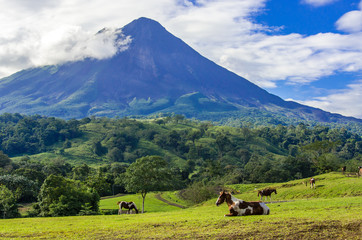 Vulcano Arenal - Horses on pasture