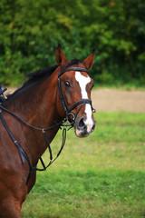 Портрет гнедой лошади с изумленным взглядом