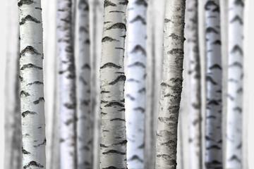 Obraz seamless birch trees - fototapety do salonu