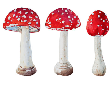 Watercolor vector amanita mushrooms