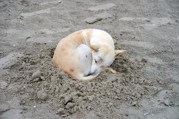 Dog sleeping on sand beach