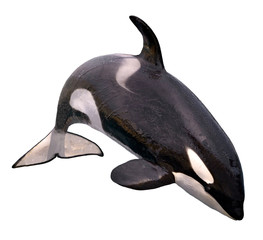 Wall Mural - Isolated killer whale jumping