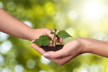 Plant Growth.