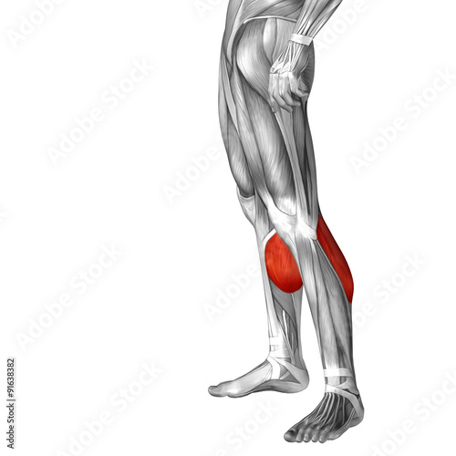 Conceptual 3d Human Front Lower Leg Muscle Anatomy Stock Photo And