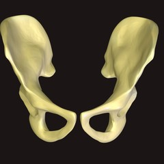 skeleton hips