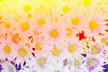 Vintage flowers background.