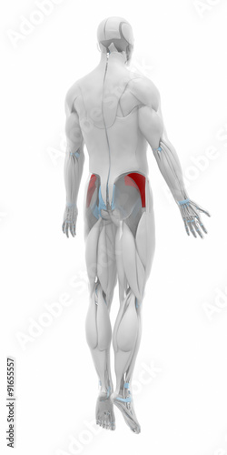 Gluteus Minimus Muscles Anatomy Map Stock Photo And Royalty Free