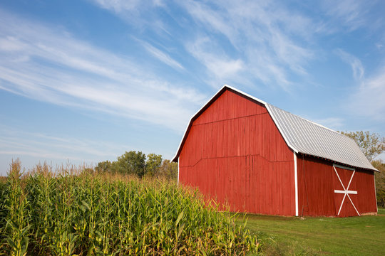Red Barn with Corn and Dramatic Sky