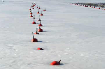 Red Buoys Rhythm