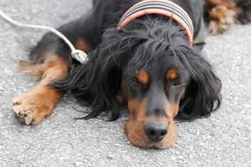 портрет собаки, которая лежит на асфальте